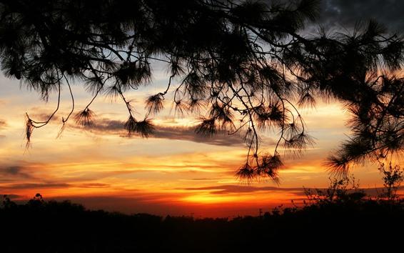 Wallpaper Sunset, twigs, silhouette