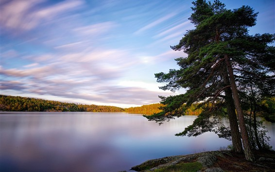 Wallpaper Sweden, lake, trees, nature landscape