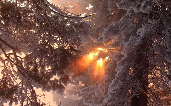 Wallpaper Thick snow, trees, winter, sun rays