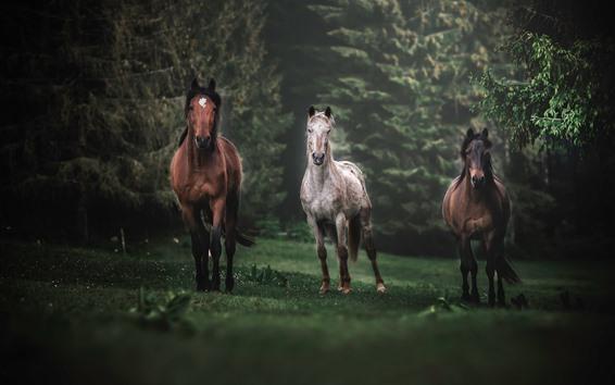 Papéis de Parede Três cavalos correndo, árvores, nevoeiro
