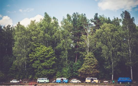 Wallpaper Trees, cars