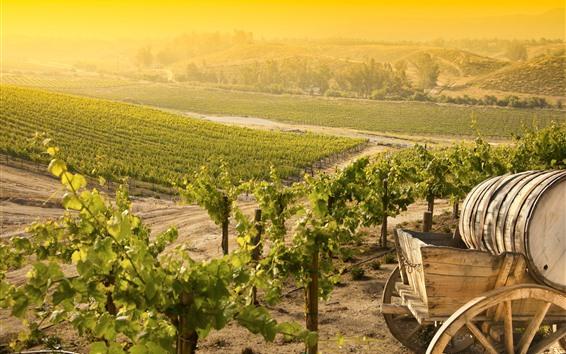 Fond d'écran Vignoble, village, soleil, matin
