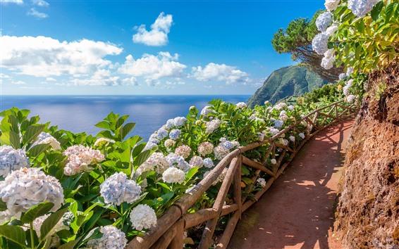 Wallpaper Azores, Sao-Miguel, flowers, footpath, sea