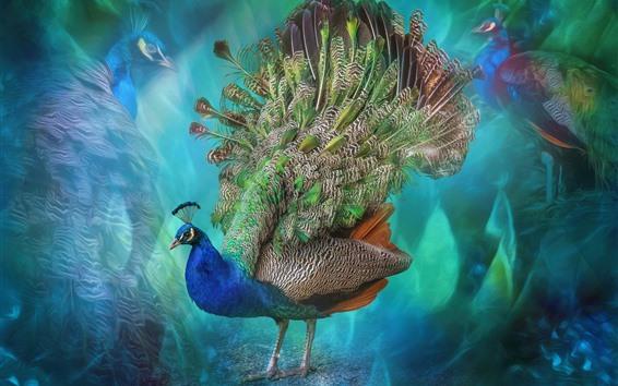 壁紙 美しい鳥、孔雀、カラフルな羽、創造的な絵