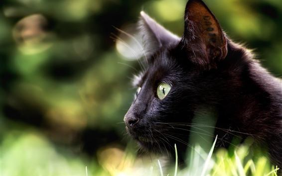 Wallpaper Black cat, look, eyes, hazy background