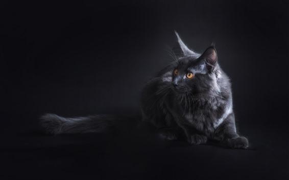 Papéis de Parede Olhar de gato preto, olhos amarelos, escuridão