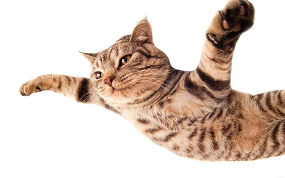 Wallpaper Cat flying, paws as wings, white background