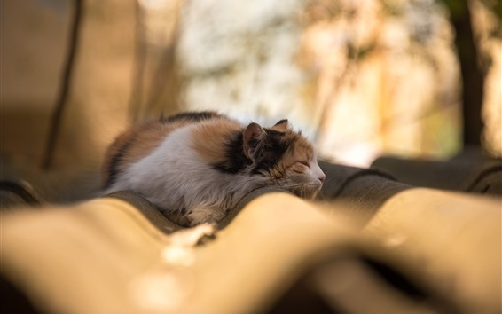 Fond d'écran Chat qui dort, fond brumeux