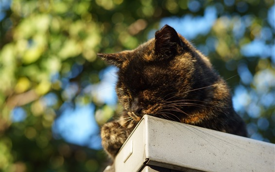 Wallpaper Cat sleeping, hazy