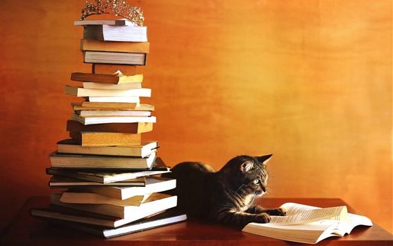 Wallpaper Cat study hard, reading book