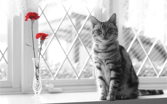 Обои Кот, окно, красные цветы