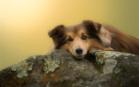 Wallpaper Cute dog look at you, stone, moss