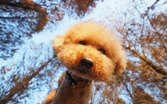 Wallpaper Cute furry dog, look, trees