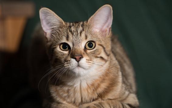 Обои Милый котенок, лицо, глаза, взгляд
