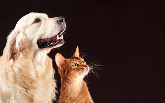 Wallpaper Dog and cat, friends, pets