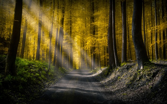 Обои Лес, дорога, солнечные лучи, утро, осень