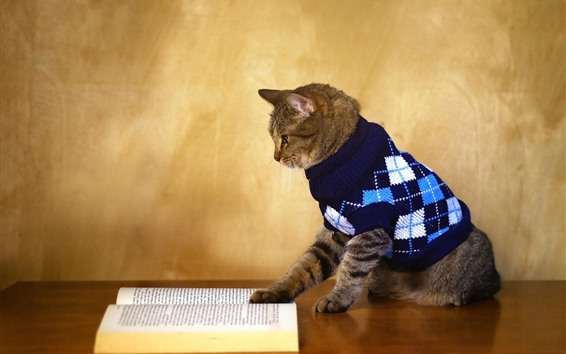 Wallpaper Funny animal, cat reading book, sweater