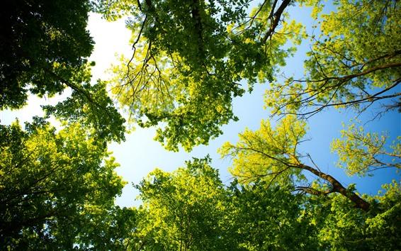 Wallpaper Green trees, summer, sunshine