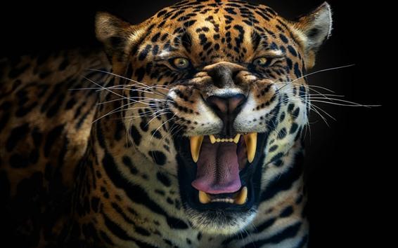 Wallpaper Jaguar roar, face, teeth