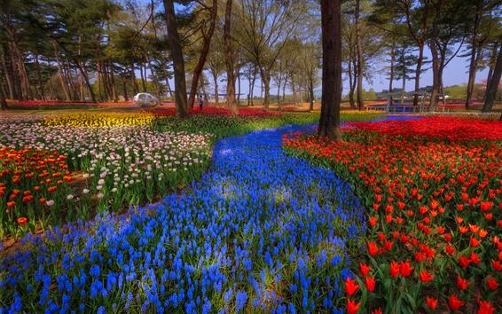 Papéis de Parede Japão, parque, árvores, tulipas coloridas, primavera