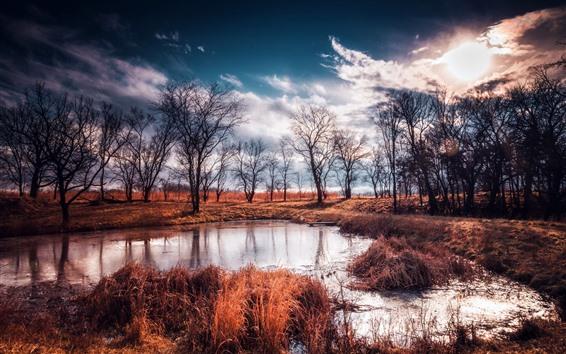Papéis de Parede Natureza, poça, água, grama, árvores, anoitecer
