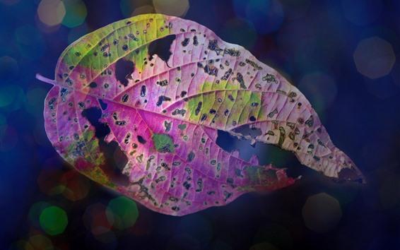 壁紙 1つの葉、色