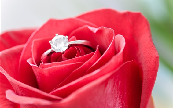 Wallpaper Red rose, diamond ring