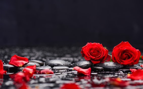 Wallpaper Red roses and petals, stones, water
