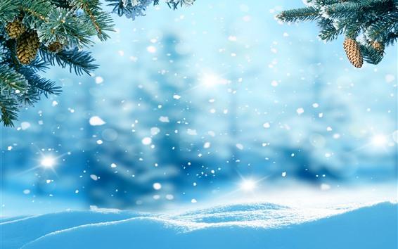 Papéis de Parede Neve, galhos de pinheiro, inverno, brilhar