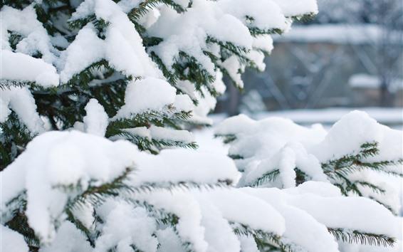 Обои Ель, густой снег, зима