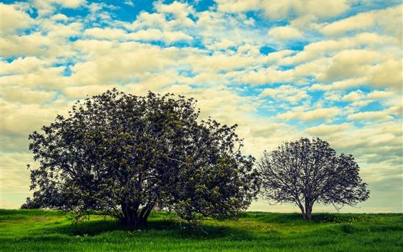배경 화면 여름, 나무, 잔디, 하늘, 구름