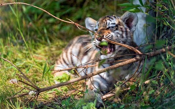 壁紙 虎カブ遊び心, 小枝, 草