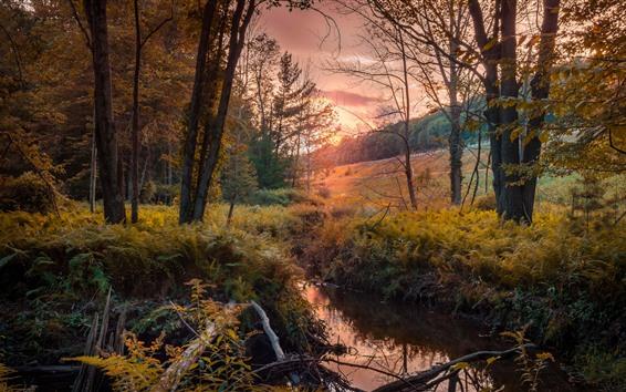 Обои Осень, деревья, ручей, закат
