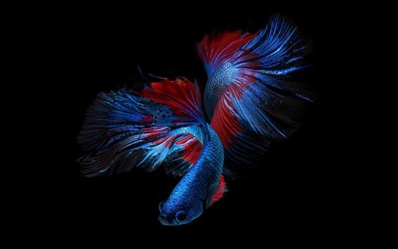 Обои Красивая голубая рыба, черный фон