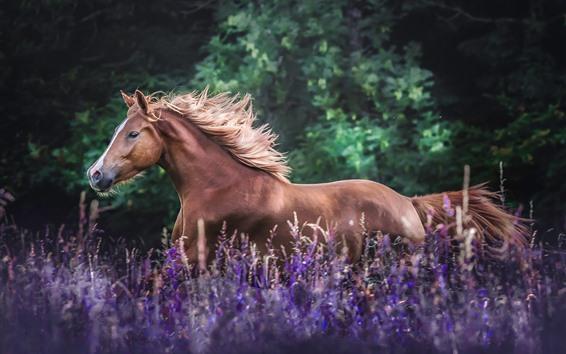 Обои Бегущая коричневая лошадь, цветы лаванды
