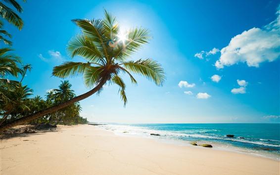 Wallpaper Caribbean, sea, beach, palm trees, sun rays, tropical