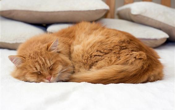 Papéis de Parede Gato dormindo, cama, travesseiro