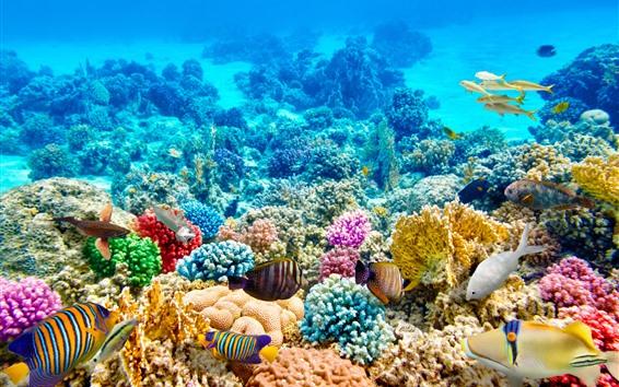 壁紙 カラフルな魚、サンゴ、水中