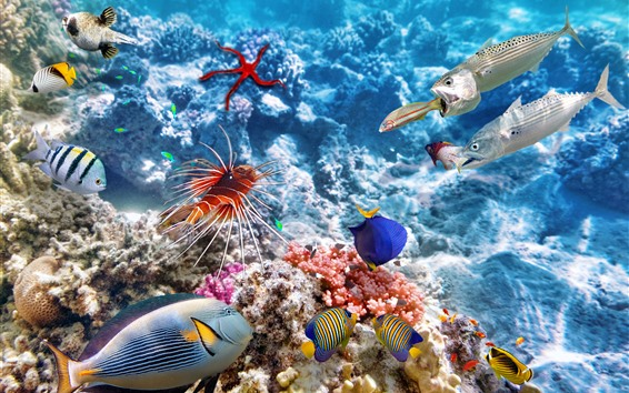 壁紙 カラフルな魚、水中、海、カクレクマノミ