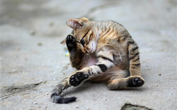 壁紙 かわいい子猫、遊び心のある、ビーチ