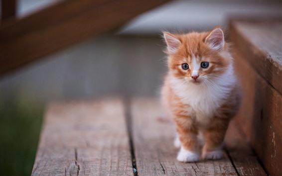 Papéis de Parede Gatinho peludo, animal de estimação bonito, escadas