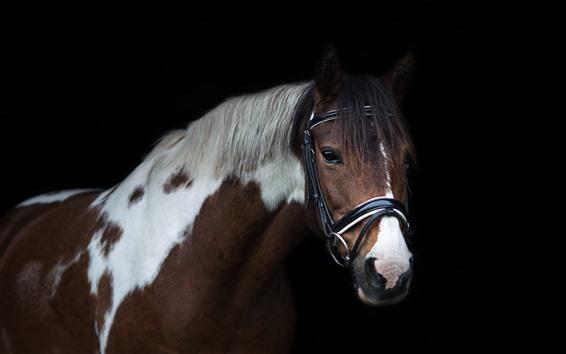 Wallpaper Horse, head, mane, black background
