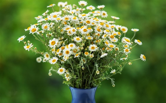Wallpaper Many white chamomile, bouquet, vase