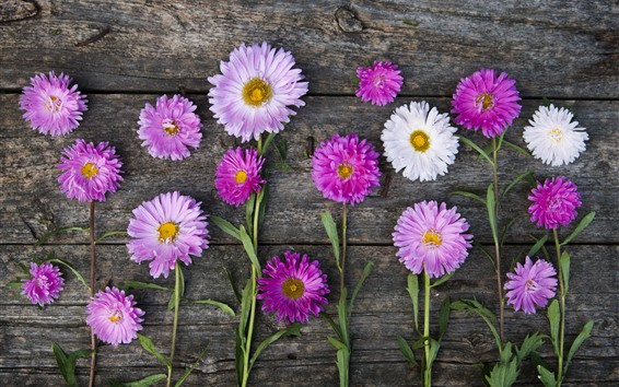 Wallpaper Pink and white asters, wood background