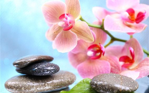 Papéis de Parede Phalaenopsis rosa, pedras