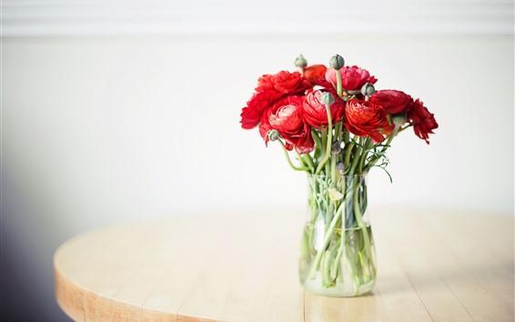 Wallpaper Ranunculus, red flowers, bouquet, vase