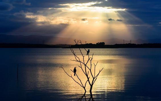 Wallpaper River, tree, two birds, silhouette