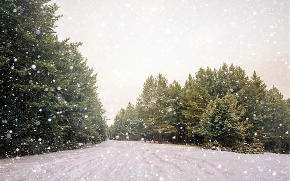 Fondos de pantalla Árboles, nevados, invierno, deslumbramiento.