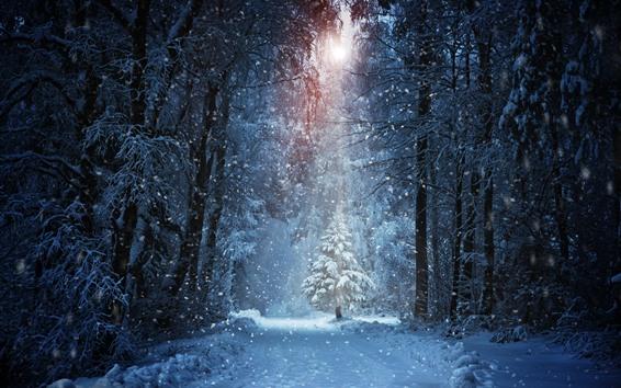 Papéis de Parede Inverno, árvores, neve, sol