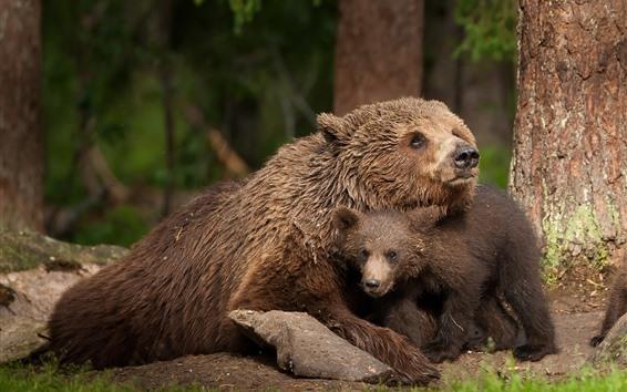 壁紙 クマ、ベアカブ、家族